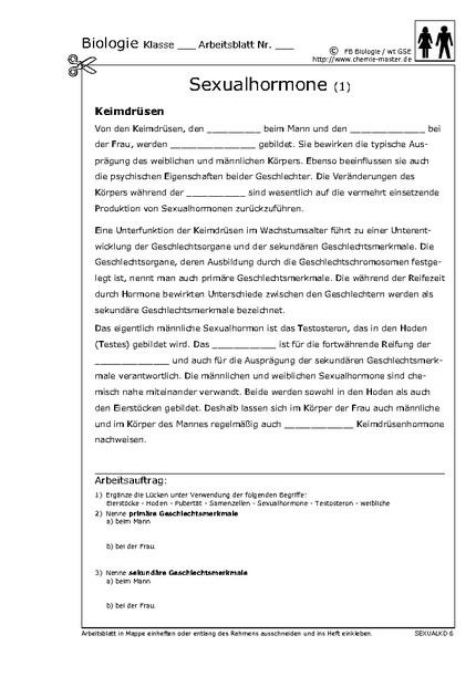 Sexualhormone arbeitsblatt
